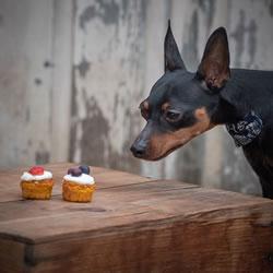 Daisy's Doggy Treats